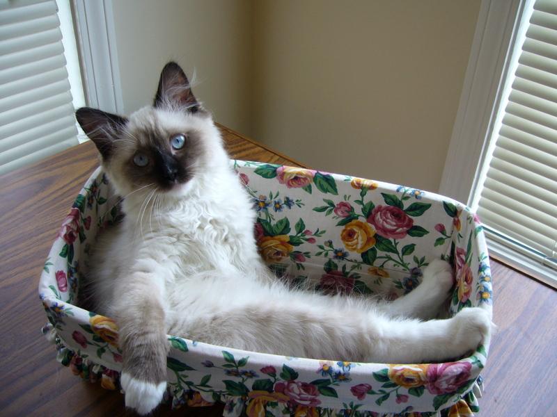 Πρέπει να αγαπάς τις γάτες που βγαίνουν
