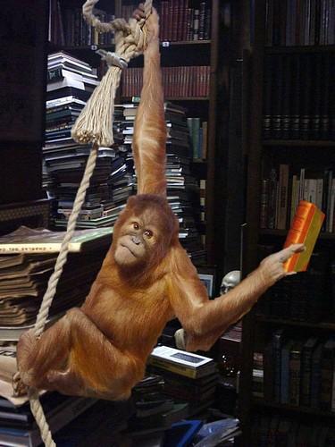 affe,bibliothek,buch,orangutan,tiere-d9b799da104b2b3477e2774eedfe6c42_h